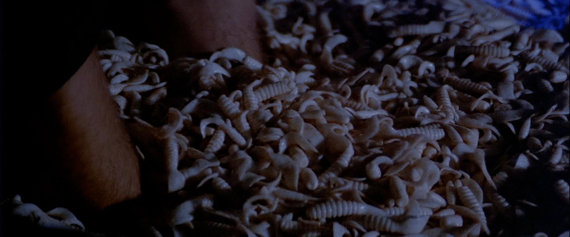 Licence to Kill - maggots