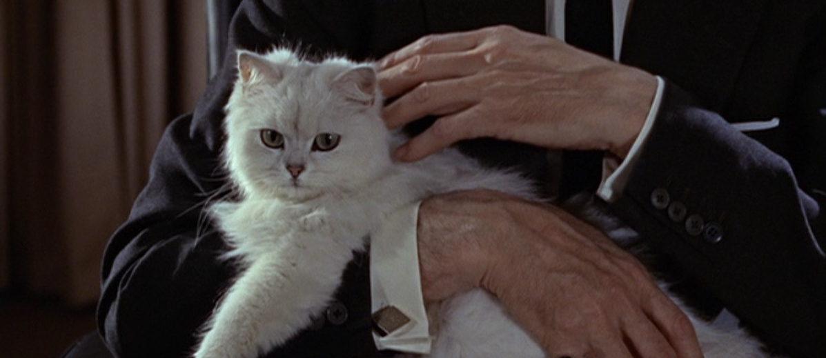 Blofeld white cat