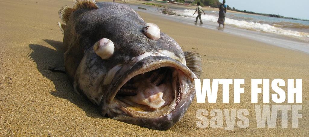 wtf fish